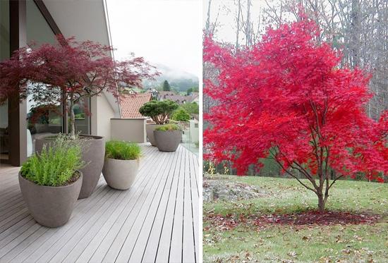 L acero giapponese per la progettazione outdoor nel vostro for Acero giapponese