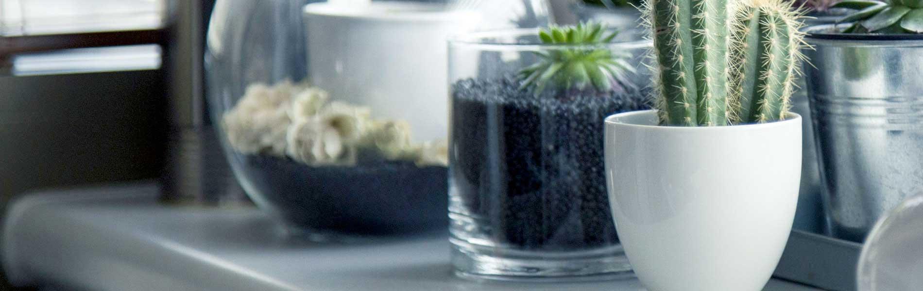 Terrario Per Piante Grasse come costruire un terrario con pochi materiali e un budget