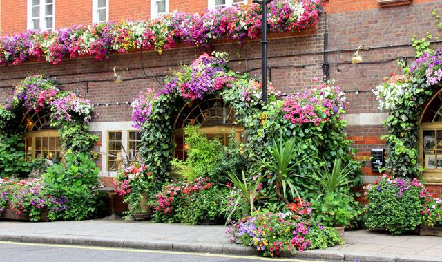Realizziamo un giardino in vaso sul balcone, sul terrazzo, sul patio