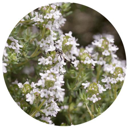 Consigli e tecniche di giardinaggio per piante e fiori - Calendario semina fiori ...