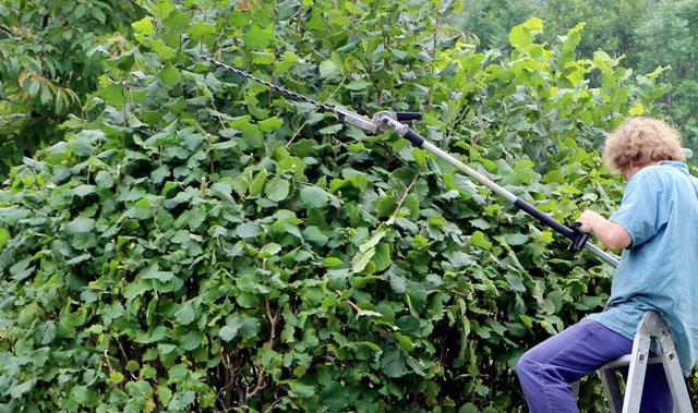 Come Potare Piante : Come potare piante e fiori di orto giardino guida base