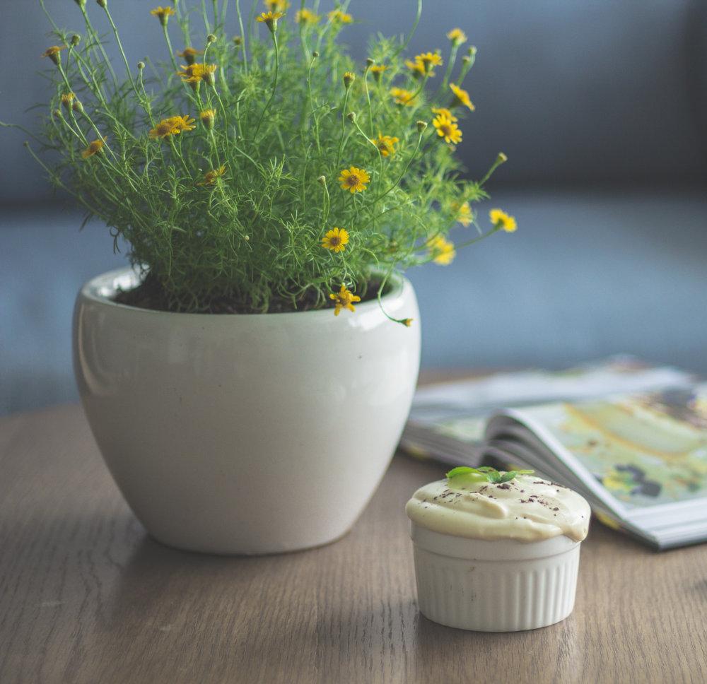 piante da appartamento arrediamo la casa con piante e fiori